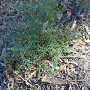 Pimelea linifolia at suppressed - 10 Jan 2021