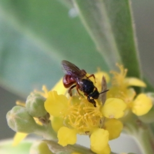 Unidentified Ant / Bee / Wasp (TBC) at suppressed by LisaH