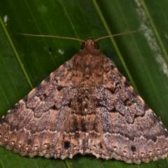 Diatenes aglossoides (An Eribid moth) at Melba, ACT - 31 Dec 2020 by kasiaaus