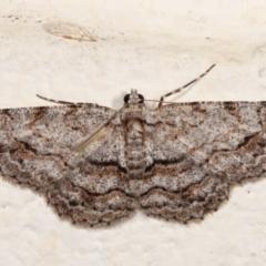 Didymoctenia exsuperata (Thick-lined Bark Moth) at Melba, ACT - 4 Jan 2021 by kasiaaus