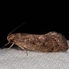 Syncometes vilis (A Concealer moth) at Melba, ACT - 5 Jan 2021 by kasiaaus
