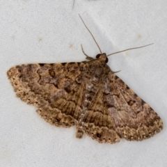 Diatenes aglossoides (An Eribid moth) at Melba, ACT - 2 Jan 2021 by Bron