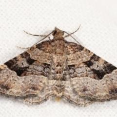 Epyaxa subidaria (Subidaria Moth) at Melba, ACT - 20 Jan 2021 by kasiaaus