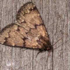 Mormoscopa phricozona (A Herminiid Moth) at Melba, ACT - 21 Jan 2021 by kasiaaus