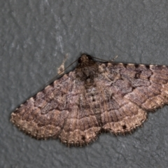 Diatenes aglossoides (An Eribid moth) at Melba, ACT - 30 Jan 2021 by Bron