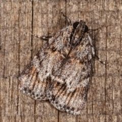 Spectrotrota fimbrialis (A Pyralid moth) at Melba, ACT - 23 Jan 2021 by kasiaaus