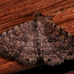 Diatenes aglossoides (An Eribid moth) at Melba, ACT - 24 Jan 2021 by kasiaaus