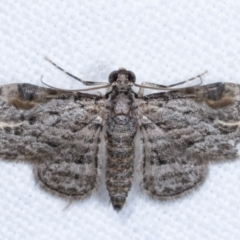 Chloroclystis insigillata (Insigillated Carpet) at Melba, ACT - 24 Jan 2021 by kasiaaus