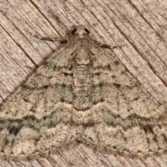 Lipogya eutheta (Grey Bark Moth) at Melba, ACT - 25 Jan 2021 by kasiaaus
