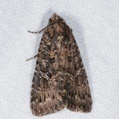 Hypoperigea tonsa (A noctuid moth) at Melba, ACT - 25 Jan 2021 by kasiaaus