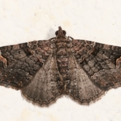 Epyaxa sodaliata (A geometer moth) at Melba, ACT - 30 Jan 2021 by kasiaaus