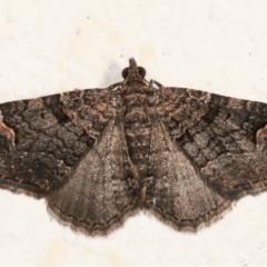 Epyaxa sodaliata (A geometer moth) at Melba, ACT - 30 Jan 2021 by kasiaaus