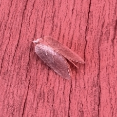 Neuroptera (order) (Unidentified lacewing) at Aranda, ACT - 6 Feb 2021 by KMcCue