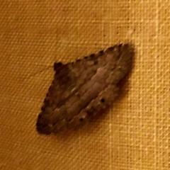 Diatenes aglossoides (An Eribid moth) at Aranda, ACT - 6 Feb 2021 by KMcCue