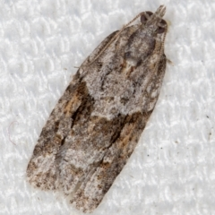 Acropolitis rudisana (A leafroller moth) at Melba, ACT - 5 Feb 2021 by Bron