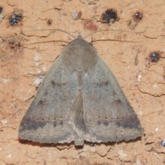 Pantydia sparsa ( A noctuid moth) at Conder, ACT - 26 Dec 2020 by michaelb