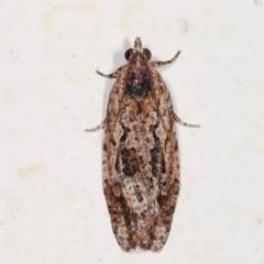 Thrincophora lignigerana (A Tortricid moth) at Melba, ACT - 5 Feb 2021 by kasiaaus
