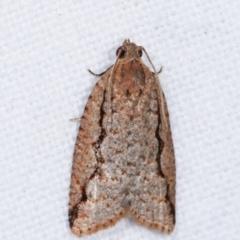 Meritastis undescribed species (A Tortricid moth) at Melba, ACT - 6 Feb 2021 by kasiaaus