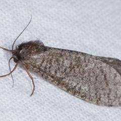 Trigonocytarra clandestina (Less-stick Case Moth) at Melba, ACT - 8 Feb 2021 by kasiaaus