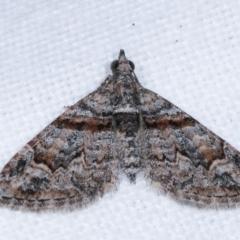 Phrissogonus laticostata (Apple looper moth) at Melba, ACT - 10 Feb 2021 by kasiaaus