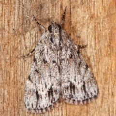 Spectrotrota fimbrialis (A Pyralid moth) at Melba, ACT - 11 Feb 2021 by kasiaaus