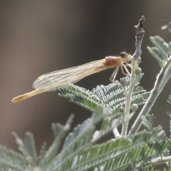 Zygoptera (suborder) (Damselfly) at Umbagong District Park - 9 Feb 2021 by AlisonMilton