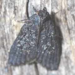 Stericta carbonalis (Charcoal Pyralid) at Black Mountain - 10 Feb 2021 by Harrisi