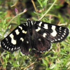 Phalaenoides tristifica (Willow-herb Day-moth) at Tidbinbilla Nature Reserve - 17 Feb 2021 by JohnBundock