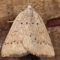 Amelora undescribed species (A Geometrid moth) at Melba, ACT - 16 Feb 2021 by kasiaaus