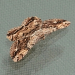 Scioglyptis lyciaria (White-patch Bark Moth) at Hughes, ACT - 23 Feb 2021 by JackyF