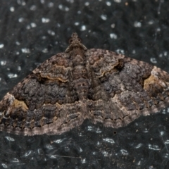 Epyaxa sodaliata (A geometer moth) at Melba, ACT - 7 Feb 2021 by Bron