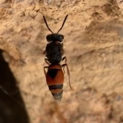 Eumeninae sp. (subfamily) (Unidentified Potter wasp) at Murrumbateman, NSW - 1 Mar 2021 by SimoneC