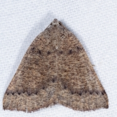 Amelora undescribed species (A Geometrid moth) at Melba, ACT - 20 Feb 2021 by kasiaaus