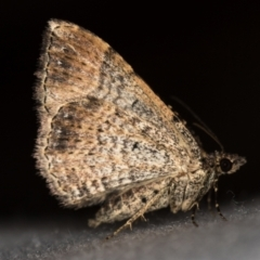 Larentiinae (subfamily) (A geometer moth) at Melba, ACT - 18 Feb 2021 by Bron