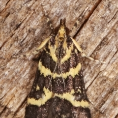 Scoparia spelaea (A Crambid moth) at Melba, ACT - 1 Mar 2021 by kasiaaus