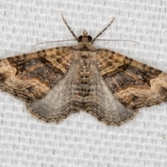 Epyaxa sodaliata (A geometer moth) at Melba, ACT - 19 Feb 2021 by Bron
