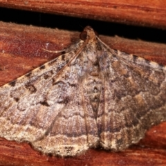 Diatenes aglossoides (An Eribid moth) at Melba, ACT - 2 Mar 2021 by kasiaaus