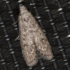 Heteromicta pachytera (Pyralid moth) at Melba, ACT - 20 Feb 2021 by Bron