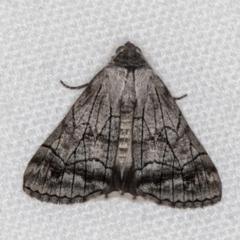 Stibaroma melanotoxa (Grey-caped Line-moth) at Melba, ACT - 6 Mar 2021 by Bron