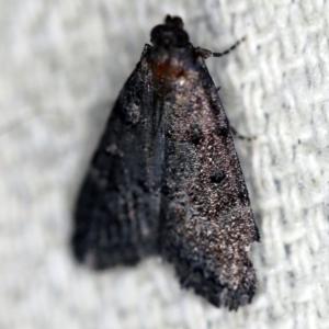 Stericta carbonalis at O'Connor, ACT - 1 Mar 2021