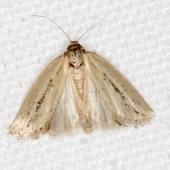 Lepidoptera sp. unclassified ADULT moth (Lepidoptera sp. unclassified ADULT moth) at Melba, ACT - 6 Mar 2021 by Bron
