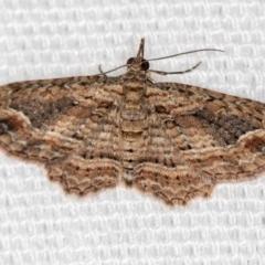 Chloroclystis filata (Filata Moth, Australian Pug Moth) at Melba, ACT - 7 Mar 2021 by Bron