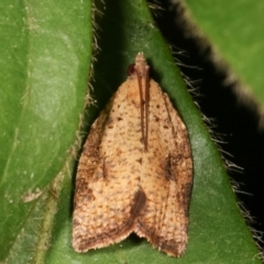 Anisogona similana (A tortrix moth) at Melba, ACT - 4 Mar 2021 by kasiaaus