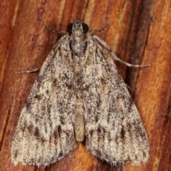 Spectrotrota fimbrialis (A Pyralid moth) at Melba, ACT - 5 Mar 2021 by kasiaaus