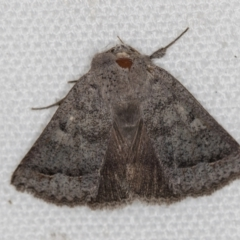 Pantydia sparsa ( A noctuid moth) at Melba, ACT - 8 Mar 2021 by Bron