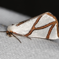 Thalaina clara (Clara's Satin Moth) at Melba, ACT - 7 Mar 2021 by Bron
