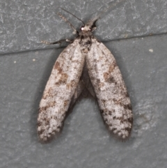 Conoeca guildingi (A case moth) at Melba, ACT - 20 Feb 2021 by Bron
