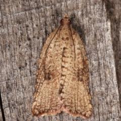 Meritastis (genus) (A Bell moth (Tortricinae)) at Melba, ACT - 6 Mar 2021 by kasiaaus