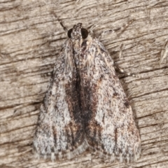 Spectrotrota fimbrialis (A Pyralid moth) at Melba, ACT - 7 Mar 2021 by kasiaaus