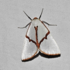 Thalaina selenaea (Orange-rimmed Satin Moth) at Tidbinbilla Nature Reserve - 12 Mar 2021 by JohnBundock